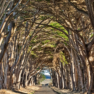 The Trees Tunnel